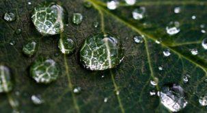 Lietaus vandens naudojimas laistymo sezono metu