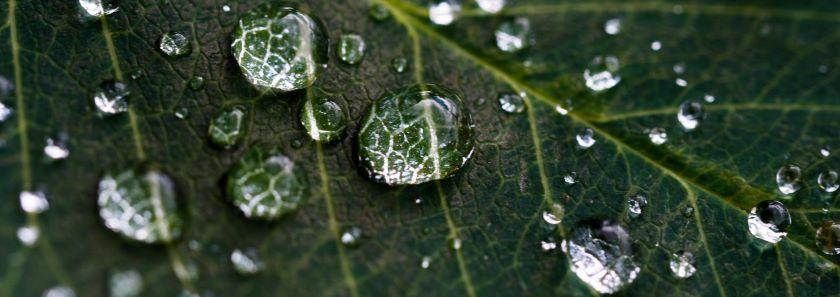 Lietaus vandens naudojimas