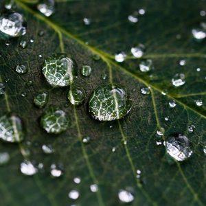 lietaus vanduo